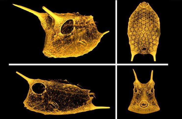 boxfish body armor