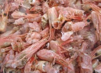 Shrimp Shells